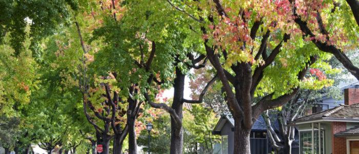 Can My Neighbor Influence My Development Plans?